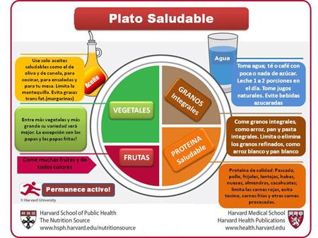 El esquema nutricional ideal - Salud
