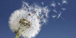 Alergia al polen, una dieta a medida para combatirla
