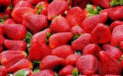 Cómo cultivar fresas en casa
