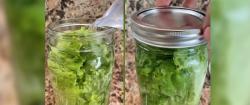Cómo hacer que las hojas para ensalada duren más de un mes