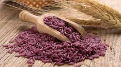 El arroz púrpura es ideal para quienes están a dieta