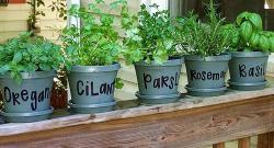 Hierbas aromáticas: ¡no solo perejil y albahaca!