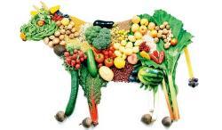 La alimentación vegana es útil para proteger el medio ambiente