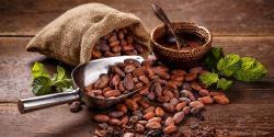 La vuelta al mundo del chocolate: descubriendo los diferentes cacaos