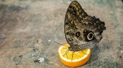 Por qué la disminución de insectos pone en riesgo el sistema alimentario