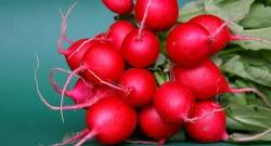 Rabanitos, un alimento antiestrés al alcance de todos