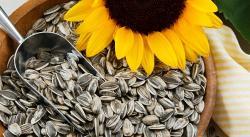 Semillas de girasol: propiedades, beneficios y cómo usarlas en la cocina