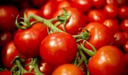 Tomate: fruto del sol, aliado del bienestar